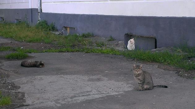 Киров, местные жители Набережной Грина